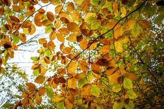 Autumn leafs on a branch