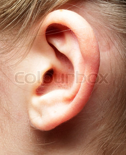 Image of 'ear, close up, ears'