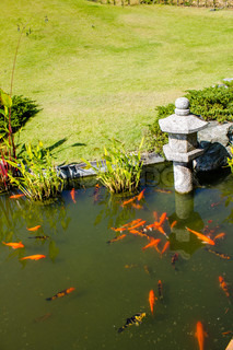Koi fish in japanese garden stock photo colourbox for Japanese garden san jose koi fish
