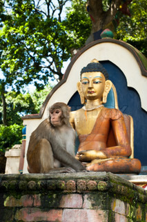 Monkey sitting near Buddha statue at Buddhist shrine Swayambhunath Stupa Monkey Temple Nepal, Kathmandu