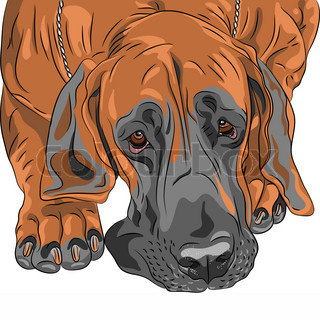 close-up portrait of the fawn sad dog Great Dane breed
