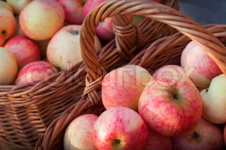 Red and yellow apples lay in the baskets, autumn garden harvest