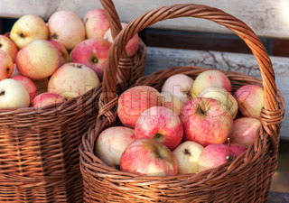 Autumn garden harvest, colorful apples lay in the baskets