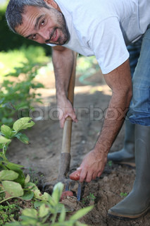 Man digging a vegetable patch