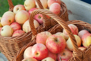 Natural fresh red and yellow apples lay in the baskets, autumn garden harvest