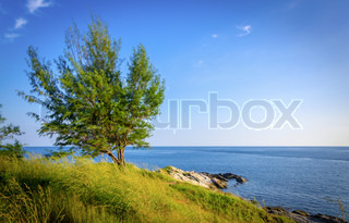 landscape of tree and sea coastline at koh samed island in Thailand