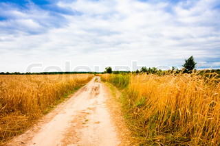earth road fields countryside - photo #48