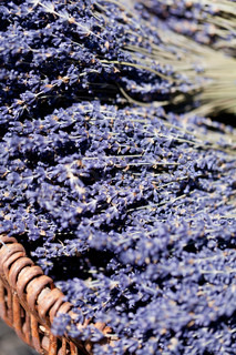 fresh aromatic lavender in basket macro outdoor