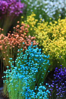 close up colorful small grass flower