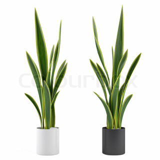 decorative grass plant in flowerpot at the white