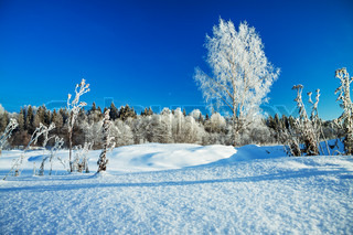winter rural landscape with the blue sky and the wood