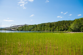 Grass and lake in Northern Norway