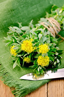 Rhodiola rosea with a knife on the board
