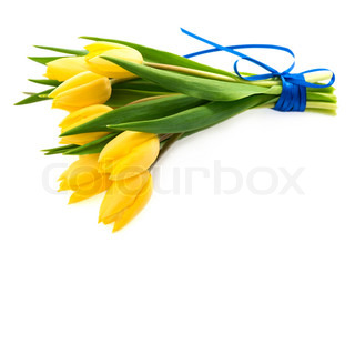 Bunch of fresh yellow tulips isolated on white
