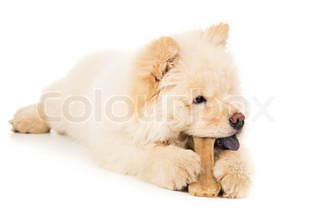 Young puppy with a bone