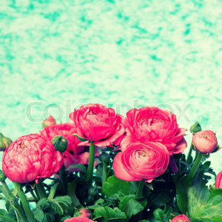 ranunculus. bouquet of fresh pink flowers