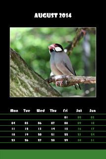 Bird calendar for 2014 - august
