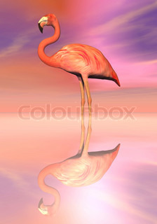 Flamingo reflection - 3D render