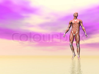 Muscles of man - 3D render