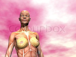 Muscles of woman - 3D render