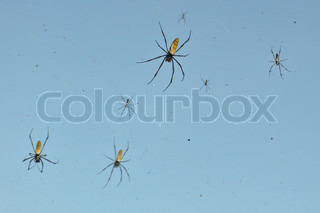 Many spiders