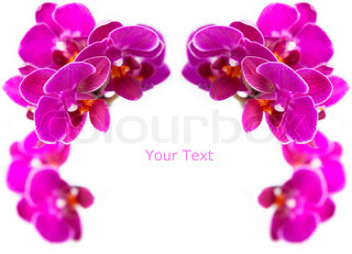 Luxurious frame of orchids
