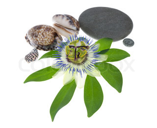 Passionflower flower with stones and cockleshells on a leaf is isolated on white background, closeup