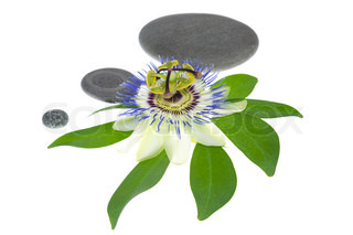 passionflower flower with stone is isolated on white background, closeup. Spa concept