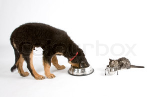 A dog and a cat eating from their feeding bowls