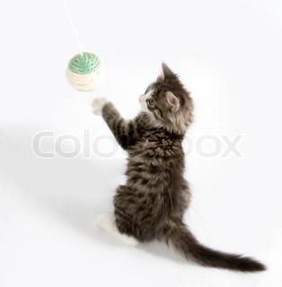 Billede af 'killing, katte, kat'