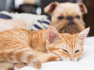 Dog and kitten sleeping together