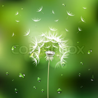 Abstract green background with  flower dandelion