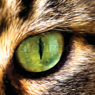 Face of Maine Coon cat showing one eye. Vector