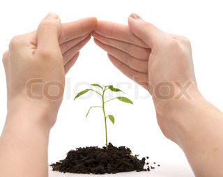 hand roof and plant