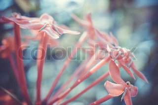 A macro shot of a small pink flowers