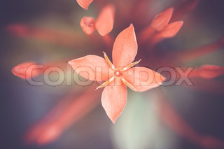 A macro shot of a small pink flower