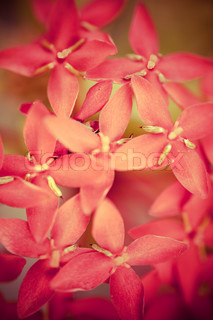 Small pink flowers on a branch