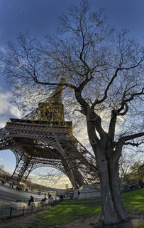 Eiffel Tower on a sunny winter morning with bare leafless tree