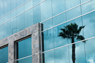 Abstract Corporate Building with Palm Tree Reflection