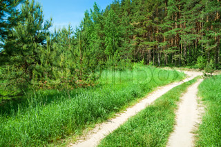 summer rural landscape with the forest and the road