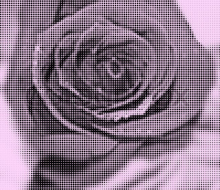 Vector background roses created with black circles and halftones