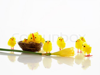 Miniature chick toys used for Easter decoration
