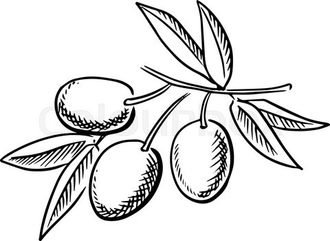 Hand drawn sketch of ripe olives