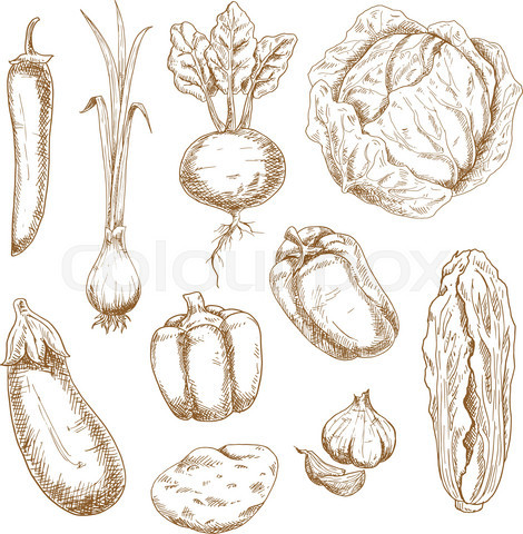 Sketch icons of farm and garden vegetables