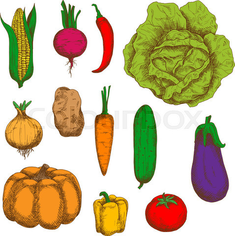 Organically grown vegetables colorful sketches
