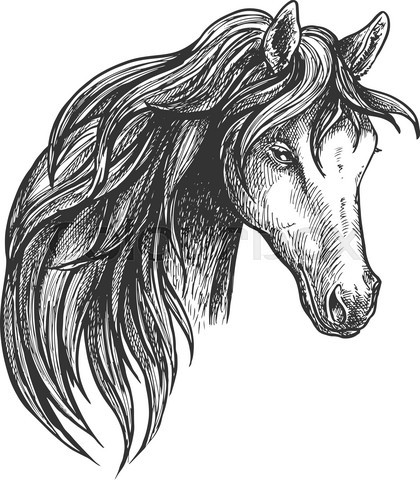 Horse of american quarter breed sketch portrait
