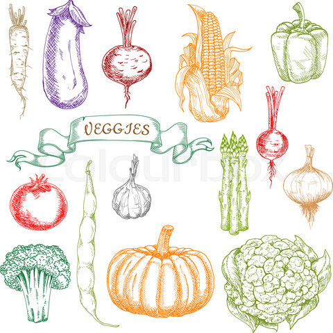 Sketches of fresh picked ripe vegetables